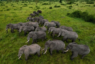 On the Frontline against Poachers: Fighting to Protect the Elephants of Africa